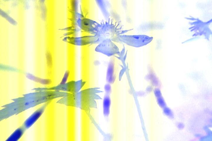 Petites incursions entr eles ailes des fées - image tirée du film